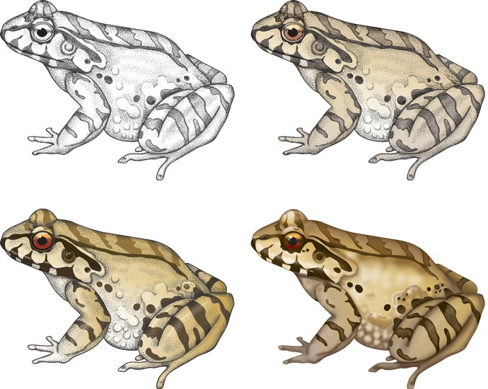 Rendering style sampler of frog