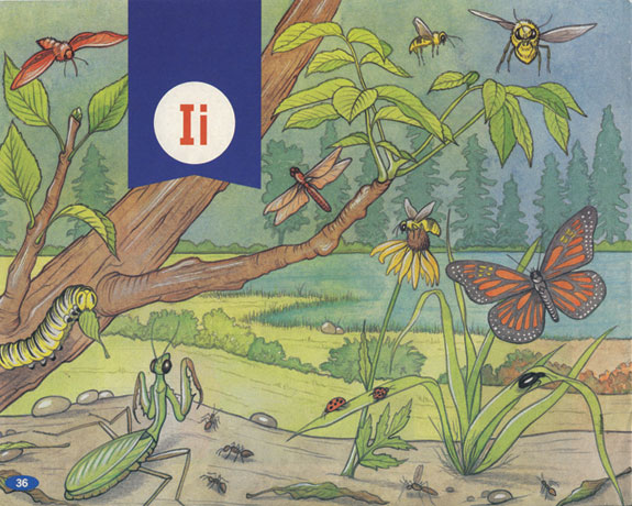 I is for Insects