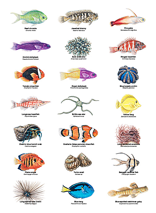 Coral Reef Fish and Invertebrate ID's