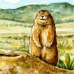 Prairie Dog Ecosystem illustration