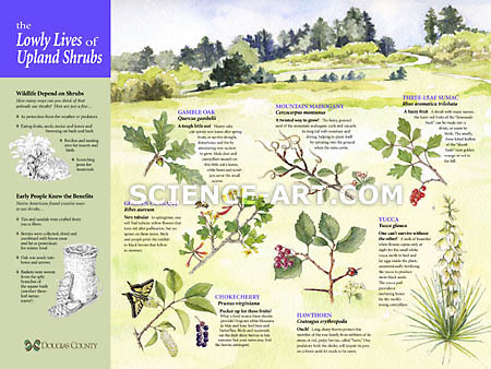 The Lowly Lives of Upland Shrubs