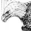 Birds of Prey Rehabilitation - Bald Eagle