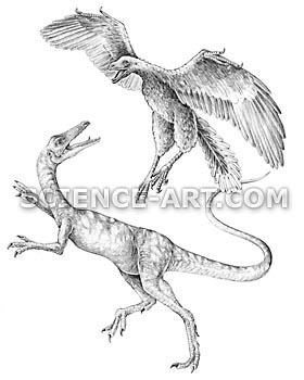 Compsognathus and Archaeopteryx