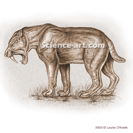Sabre-tooth Cat - Smilodon