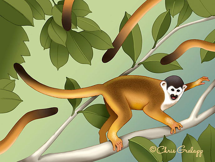 Squirrel monkeys fleeing