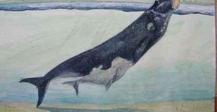 The right whale to hunt