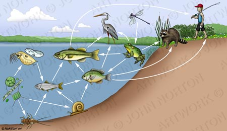 Aquatic/Terrestrial Food Web