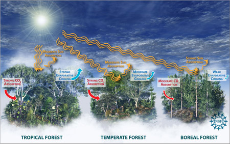 Climate Effects on Forest
