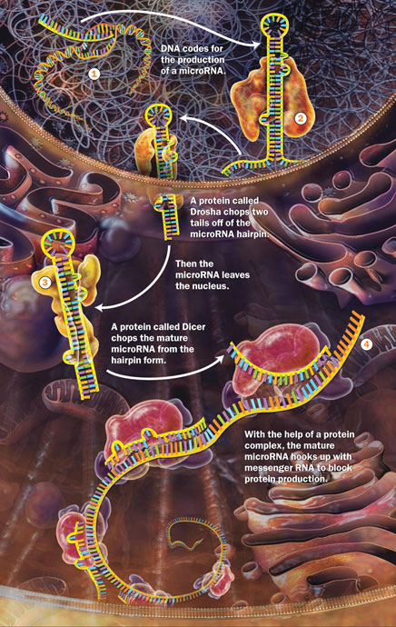 Cell RNA Processing
