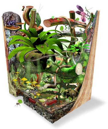 Rainforest Cube